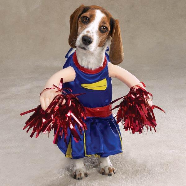 but a doggie halloween costume