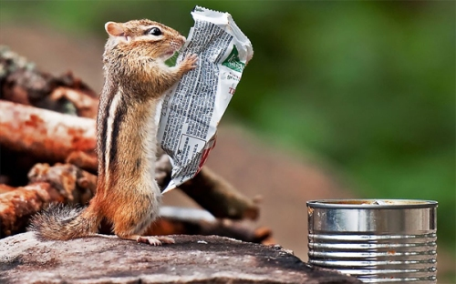 chipmunk reader