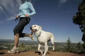 jogging dog