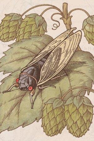 cicada-close01
