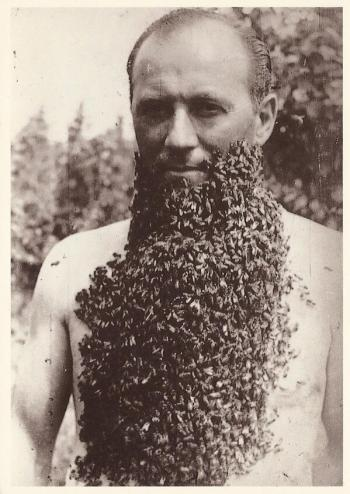 bee bearder