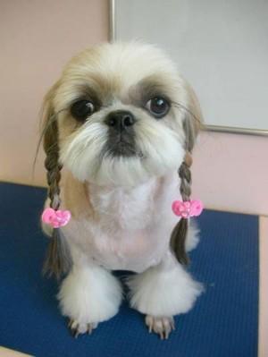 doggie braids