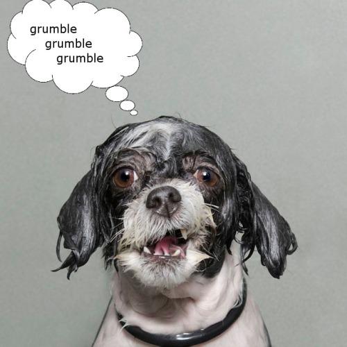 wet-dog-bubble