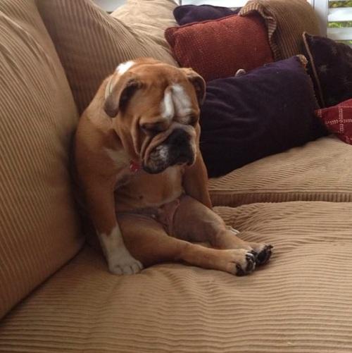 dog asleep sitting up
