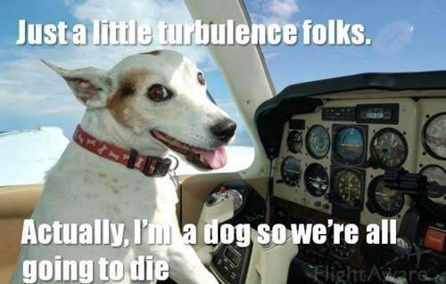 turbulence dog