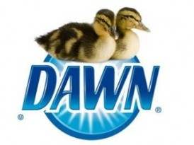 dawn ducks