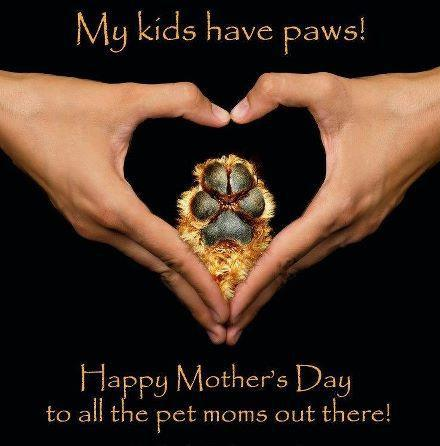 dog moms mothers day